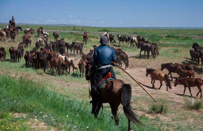 大牧场放牧业