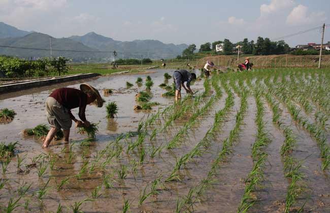 农业合作社成立条件和程序
