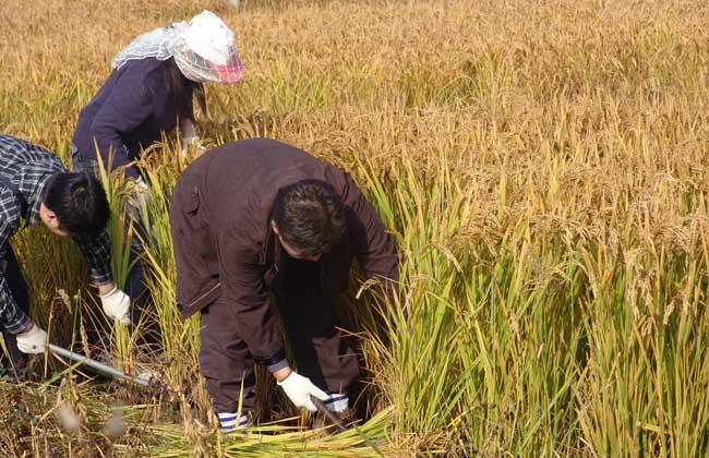 农业合作社