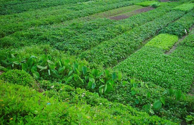 中国农业未来发展趋势