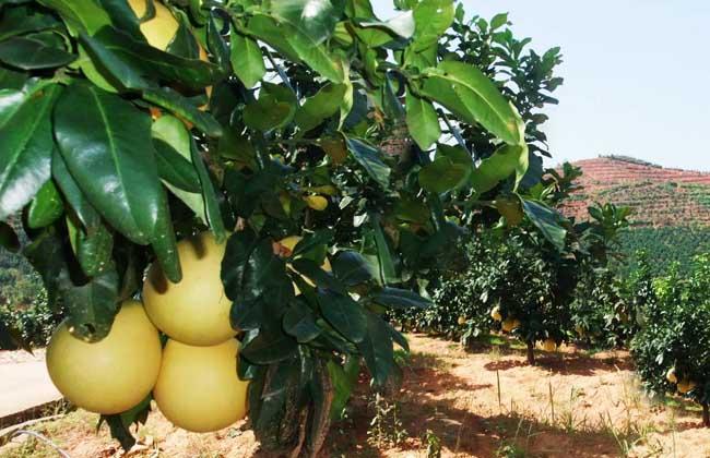 有机农业发展前景