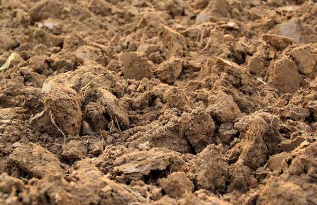 土壤改良技术_土壤改良有哪些方法? - 农业科技 - 黔农网