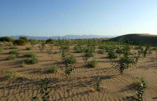 气候变化对农业生产的影响