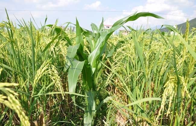 农业区位因素