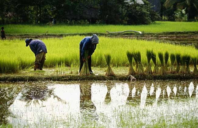 传统农业和现代农业的区别