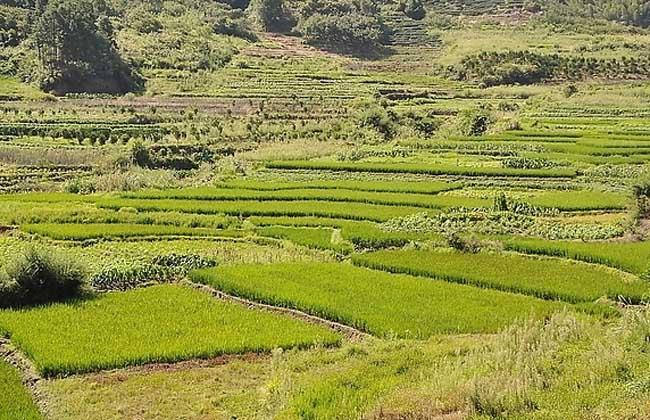 农村土地承包合同