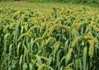 农业的区位因素