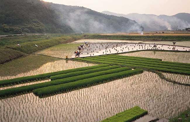 农村土地流转模式