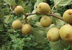 猕猴桃种植技术视频