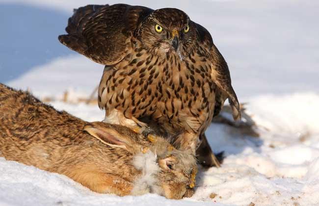 不见兔子不撒鹰的意思
