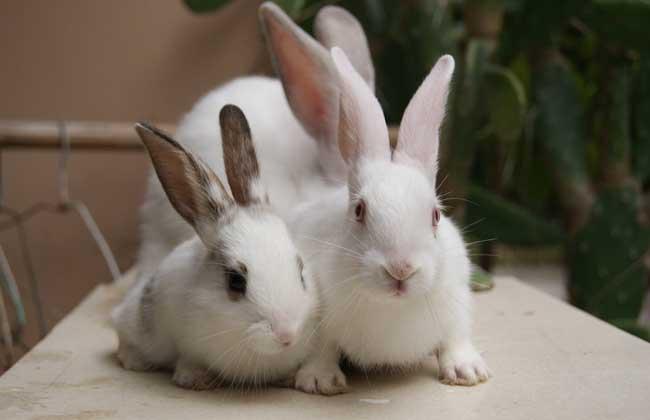 兔子吃什么食物?