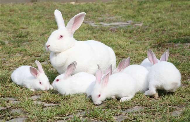 兔子的尾巴有什么作用?