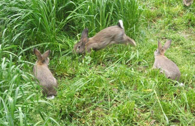 兔子疾病防治技术