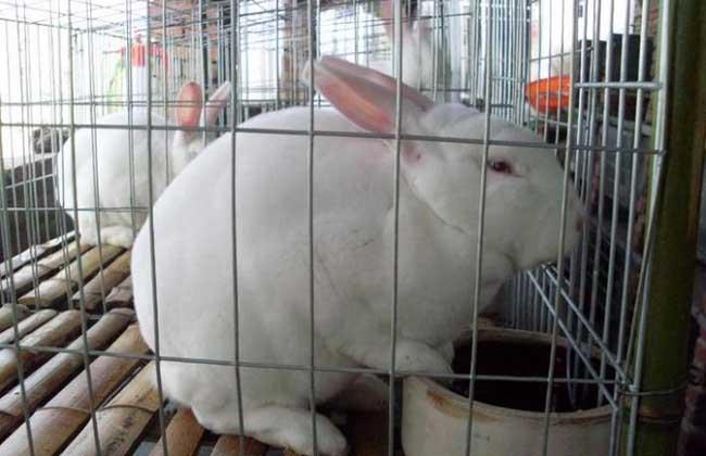 兔子养殖设备有哪些?