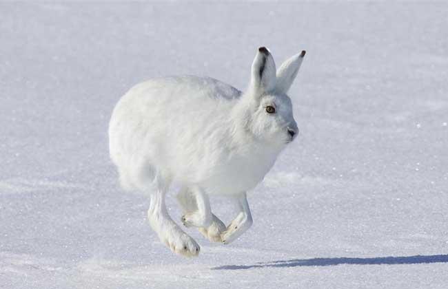 种类兔子大全图片(2)v种类北极熊的书图片