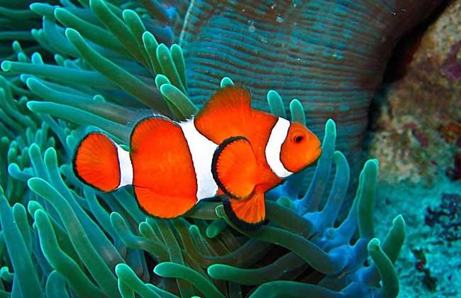 小丑鱼价格多少钱?