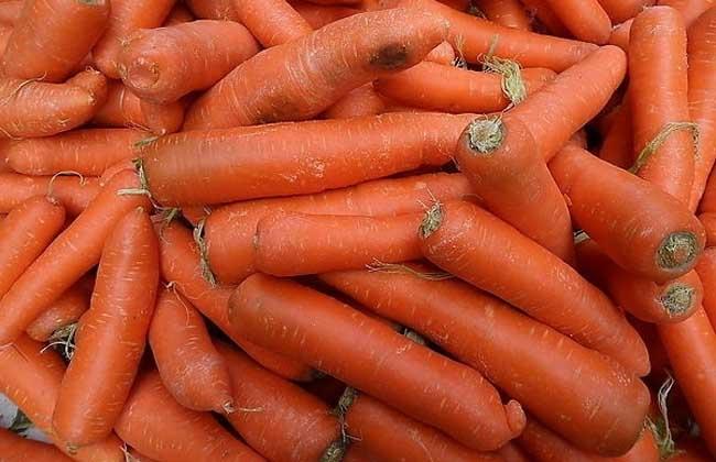 白萝卜和胡萝卜的区别