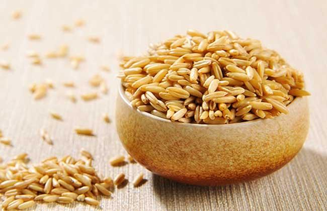 野燕麦的功效与作用