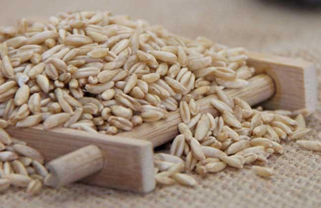 野燕麦是真的吗?
