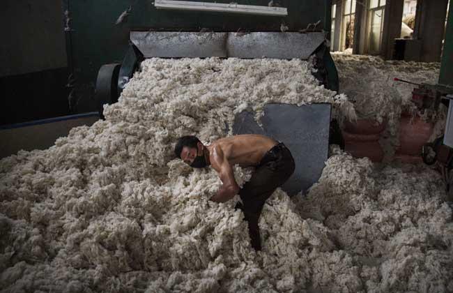 羊毛多久剪一次