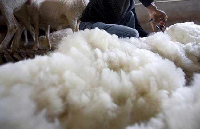 羊毛出在羊身上是什么意思?
