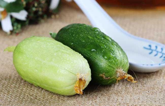 水果黄瓜是转基因吗?