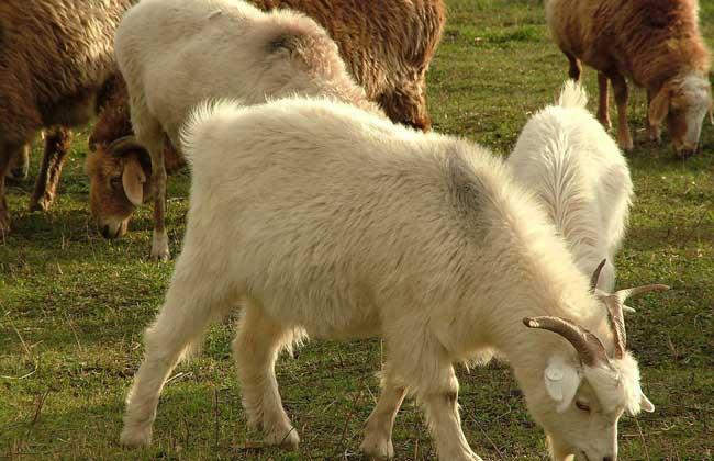 顺手牵羊的意思