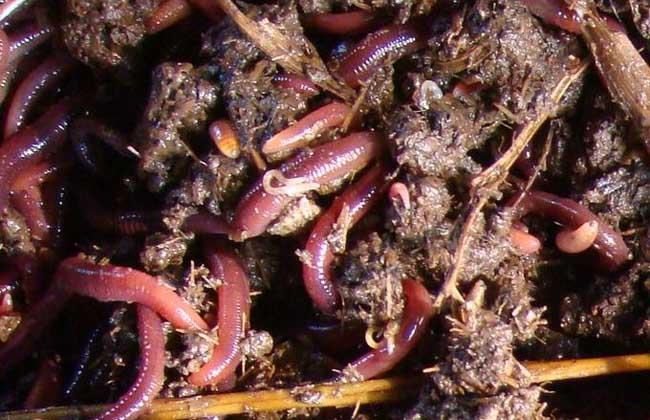 花盆里有蚯蚓好吗?
