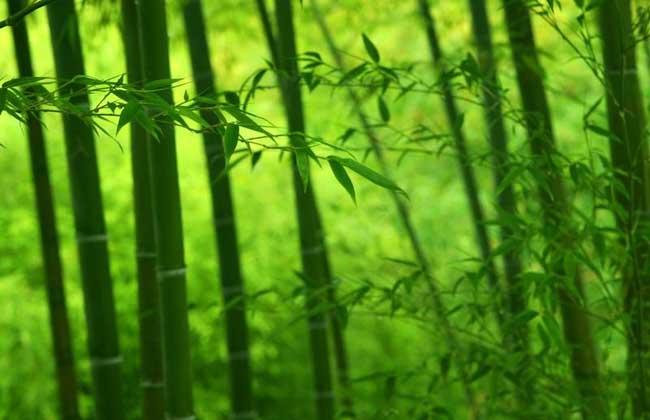研学:竹子的象征意义与文化寓意