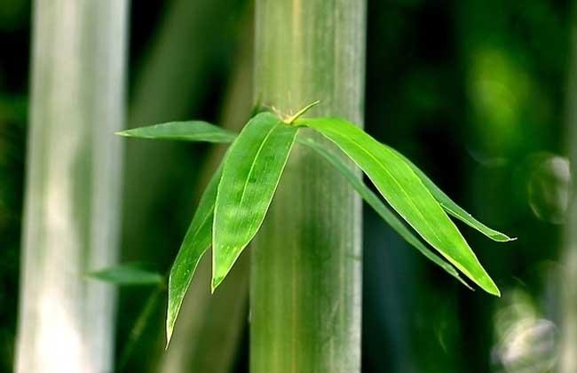 竹子的精神品质