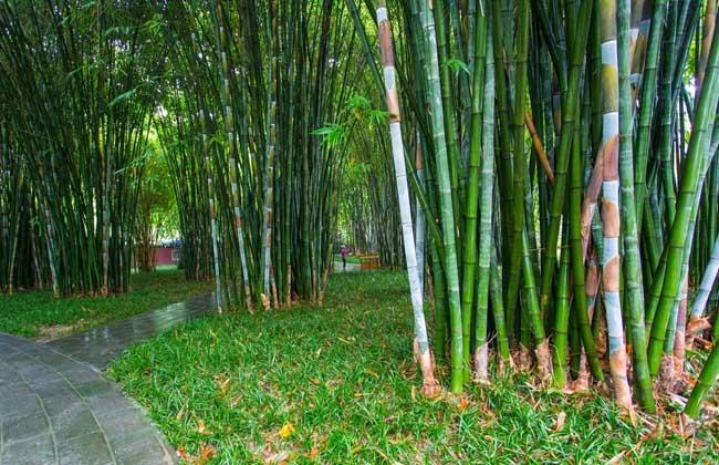 关于竹子的诗句有哪些?