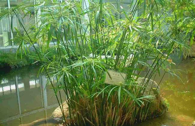 竹子的种类图片大全(2)