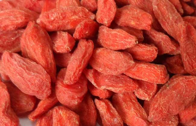 吃枸杞子能补肾吗