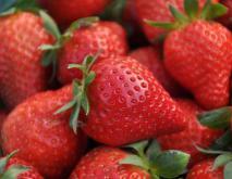 种草莓是什么意思?