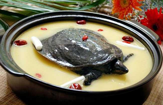 怀孕能吃甲鱼吗