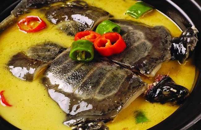 甲鱼不能和什么一起吃
