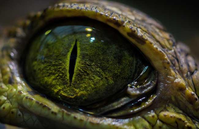 鳄鱼是保护动物吗?