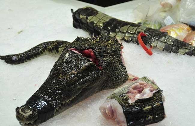 鳄鱼肉的功效与作用