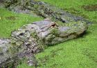 鳄鱼养殖成本和利润