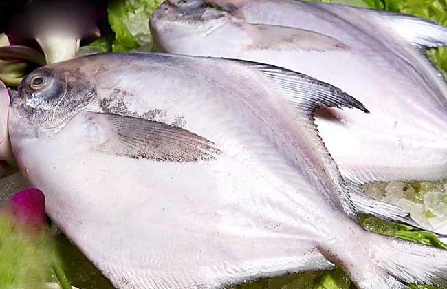 鲳鱼多少钱一斤