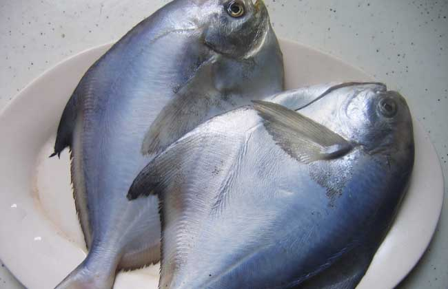 鲳鱼的营养价值