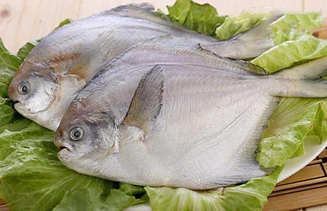 白鲳鱼价格多少钱?