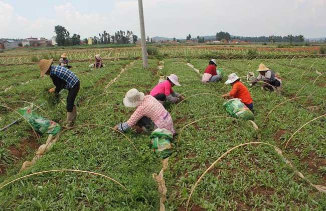 农村劳动力中介市场