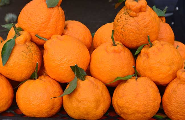 丑橘的功效与作用