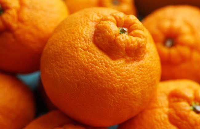 吃丑橘会上火吗