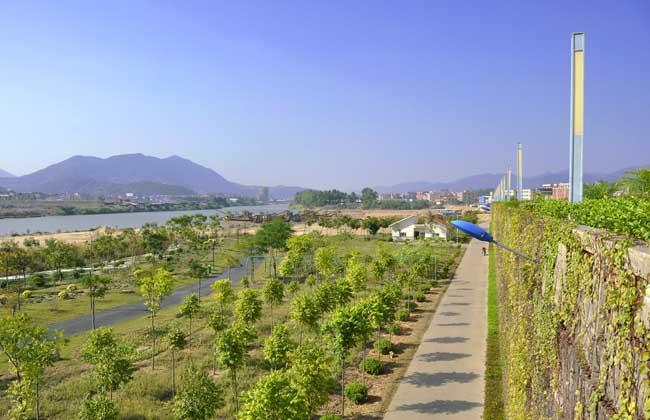 乡村绿化种植