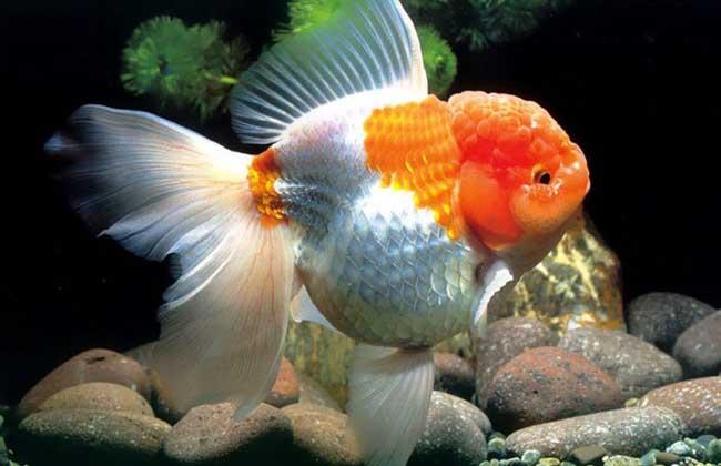 金鱼几天换一次水?