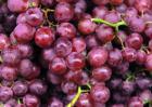 葡萄品种图片大全