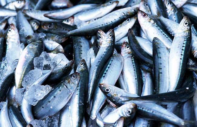 食用海鱼种类