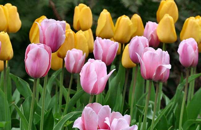 春天开的花有哪些?(3)